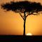 Kenya AA (Mount Kenya)