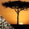 Kenya AA Mount Kenya (Rå kaffe)
