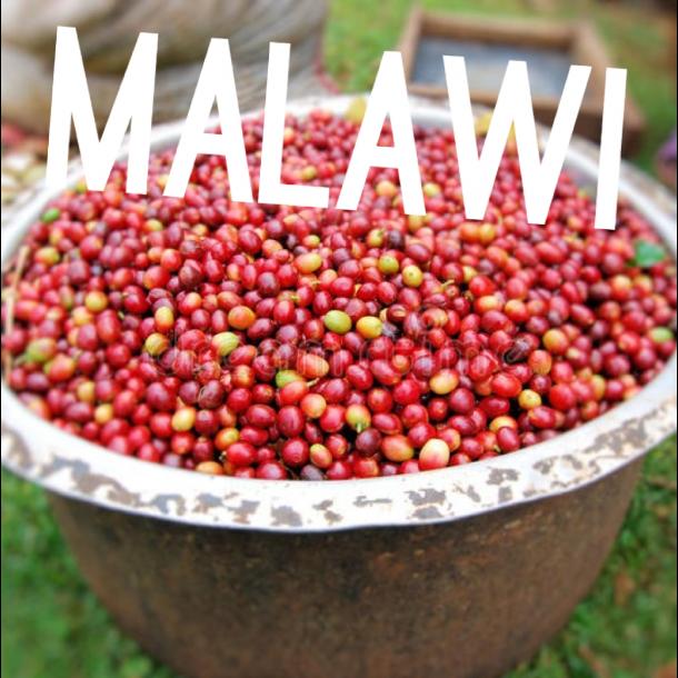 Malawi Pamwamba AA+ SÆSONKAFFE (Rainforest Alliance)