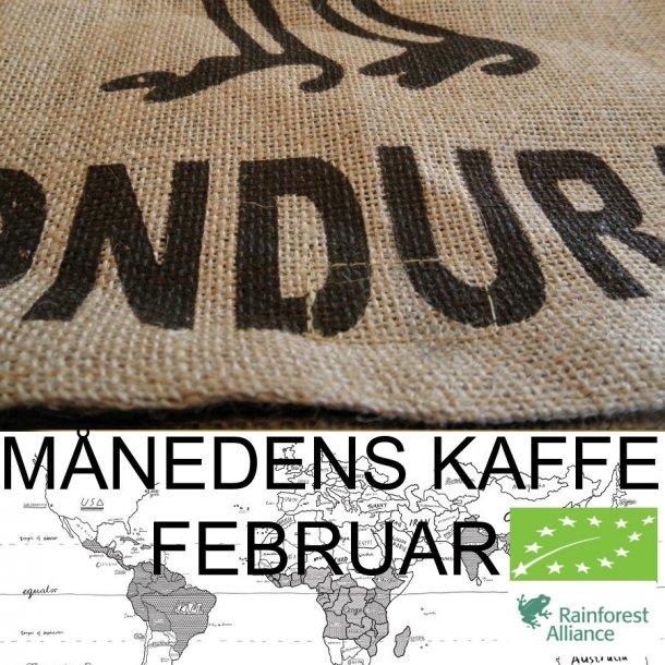 Kaffe ekstrakt Grønne kaffebønner bruker