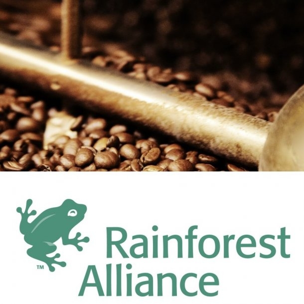 Guatemala Monte Cristo | Rainforest Alliance